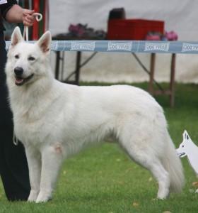 Blaze Weiße Wupper Wölfe