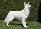 Legend of White Balou