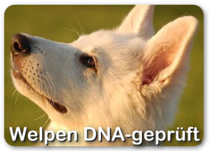 welpen_dna_start_01
