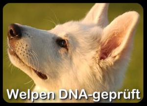 welpen_dna_start_01